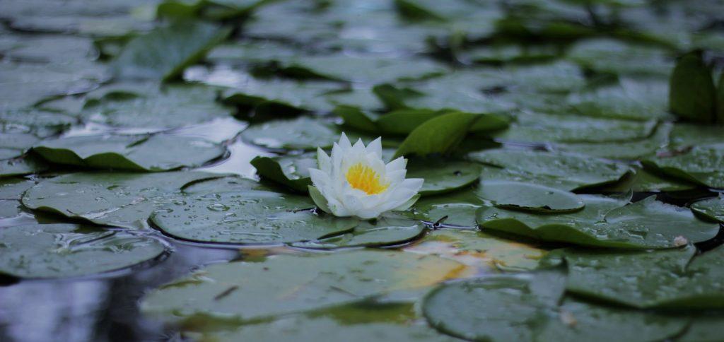 Other Activities (Maha Karuna Buddhist Society)